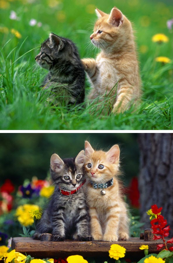 Cute Cats HQ Wallpapers Fast Download